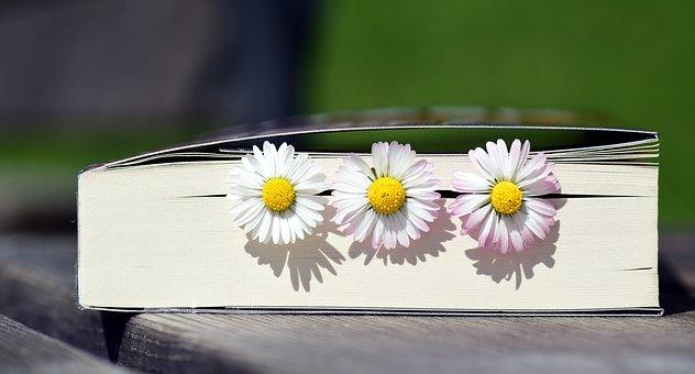 book-2319957__340